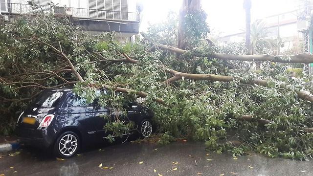 עץ שקרס וחסם נתיב תנועה