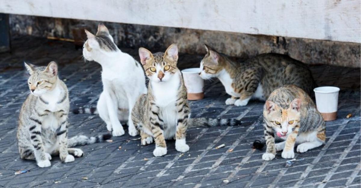 מאכילים את חתולי הרחוב