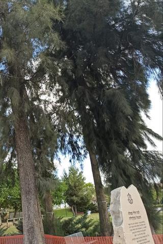 העץ בפינת ההנצחה בכניסה לשכונה