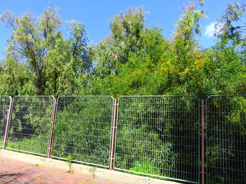 צילום של תרצה: העולם דרך הגדר
