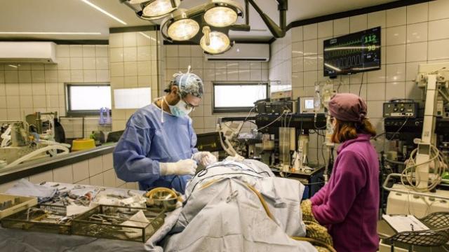 חדר הניתוח במרכז וטנוירו