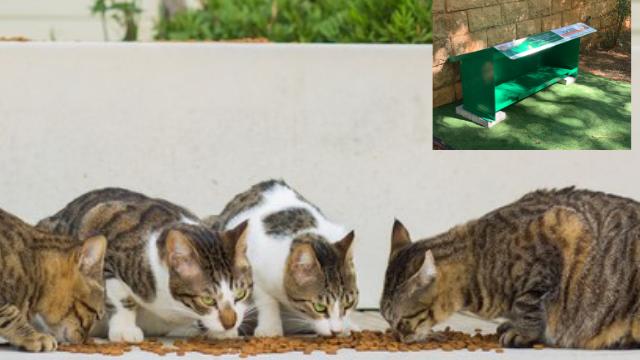עמדות האכלה לחתולים