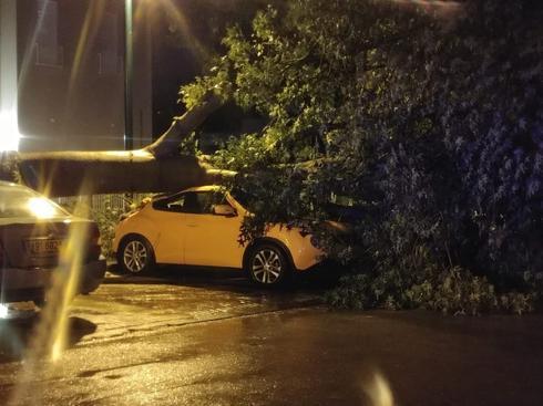 העץ שקרס ברחוב עמק דותן | צילום: מתוך הפייסבוק