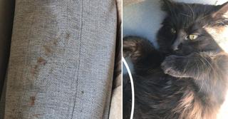 החתולה ג'ורג' וטביעות הנעליים שהתגלו בדירה   צילומים: פרטי