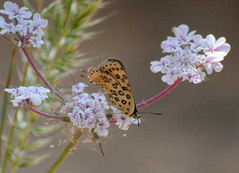 להציל את הפרפרים | צילום: אביטל גיל